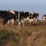 Exploring Uruguay's Central Farming Areas