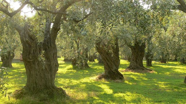 Uruguay Making It's Mark in Specialty Crops
