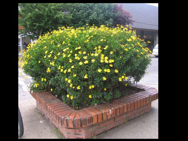 Yellow flowers in planter reduced