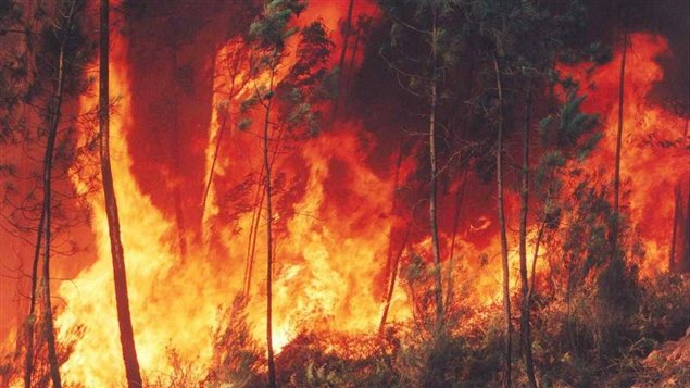 Wildfires Burn in Central Chile