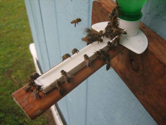 Making the Most of a Bee Invasion